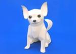 Chihuahua.jpg